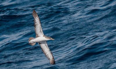 """Projecto """"Capredux – Redução das Capturas Acidentais de Aves Marinhas na Zona de Protecção Especial Aveiro"""