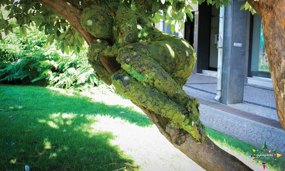 estatuas-vivas-agitagueda-litoral-magazine-agosto-destaque