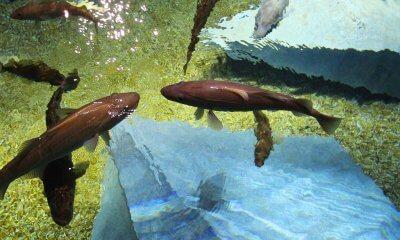 4º aniversário aquário bacalhaus litoral magazine