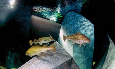 museu-maritimo-ilhavo-bacalhau