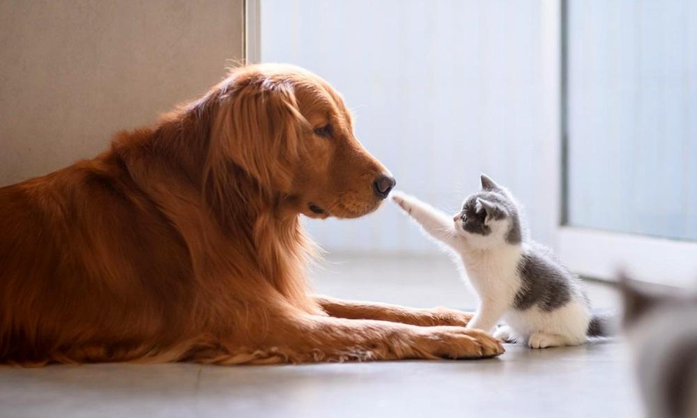 Cão e gato a brincar